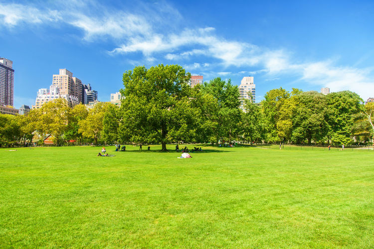 Scenic View Of Grassy Landscape Against Sky At Central Park On Sunny Day