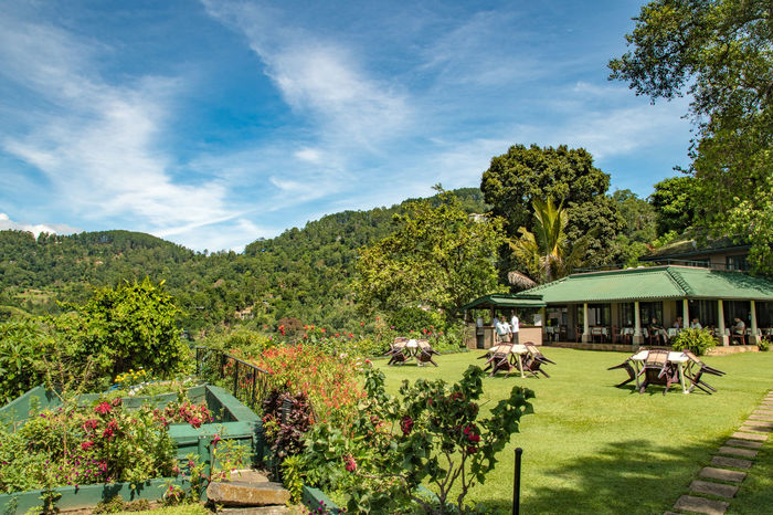Green and fertile Abroad Beauty In Nature Business Cafe Day Dream Business Eden Fertility Growth Heaven Landscape Men Nature Outdoors Paradise Peaceful People Restaurant Serenity Sky Sri Lanka Stunning Tourists Tree Tropical