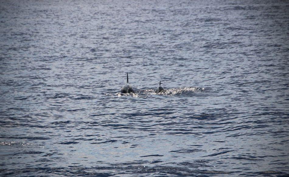 Schiff Dolphines Meer Meer Ocean Day Delfine Küste Nature Ocean Outdoors Ship Water