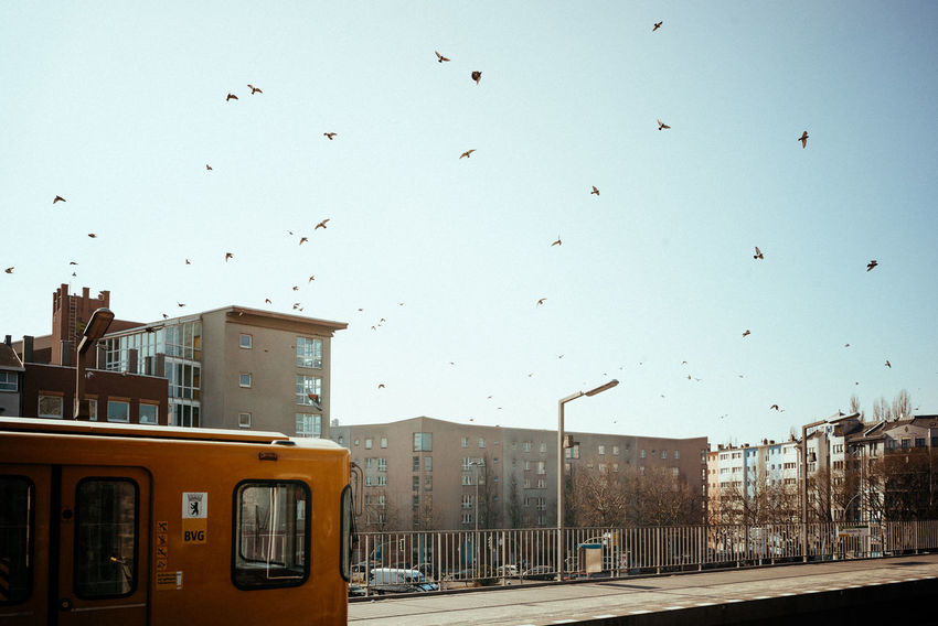 Doves at station platform City Doves Architecture Berliner Ansichten Bird Birds Birds In Flight Birds_collection Building Exterior Built Structure City Clear Sky Day Dove Land Vehicle Mode Of Transport Nature No People Outdoors Public Transportation Road Sky Street Transportation Urban