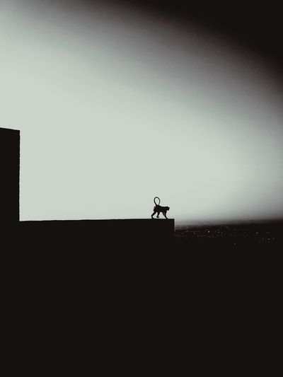 Silhouette of man standing against clear sky