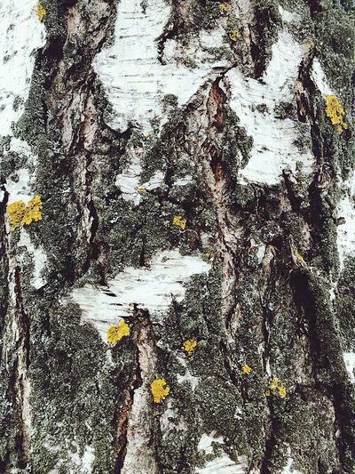 #Береза #Birch #Tree Bereza #birch #tree Backgrounds Full Frame Abstract Pattern Textured  Paint Yellow No People