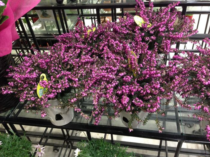 Architecture Beauty In Nature Blossom Built Structure Day Flower Flowers Japan Flowers Shop Fragility Freshness Growth Nature No People Outdoors Pink Color Plant Purple Rhododendron Springtime Tree