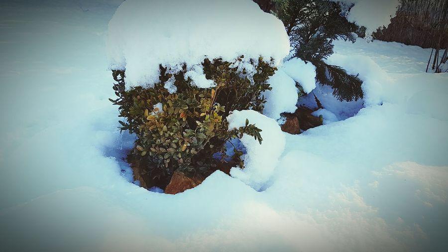 Snowy garden,