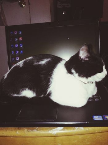 Cat Blackandwhite EyeEm Best Shots Sleeping