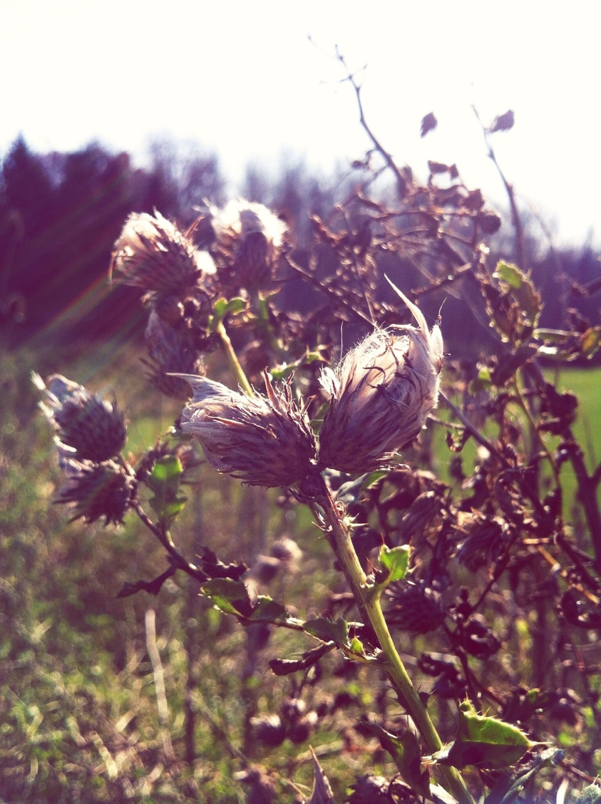 growth, flower, freshness, plant, focus on foreground, close-up, nature, fragility, beauty in nature, bud, stem, flower head, blooming, field, day, sky, growing, outdoors, petal, beginnings