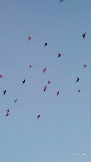 bird Life Love Anmil Birds Flying Day No People