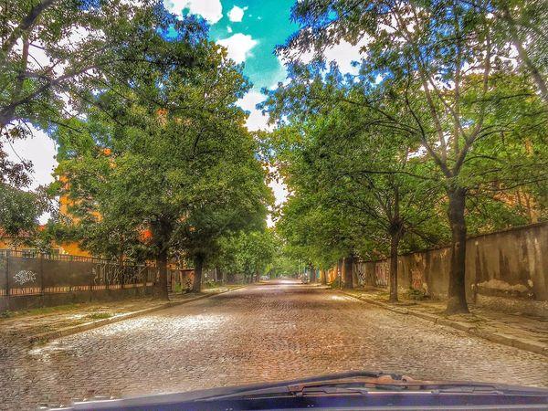 Sofia Trees Street Capital Driving Car Old Street Calming Road Urban