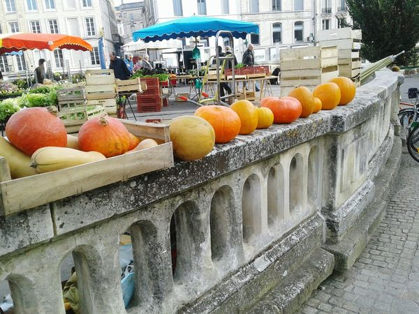 Niort Pumpkins Fresh Produce Walking Capture The Moment