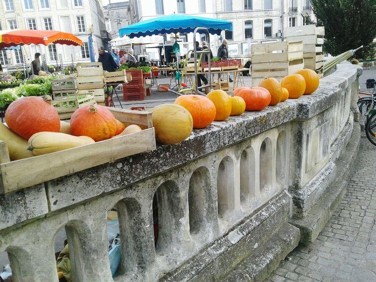 Niort Pumpkins Fresh Produce Walking Capture The Moment