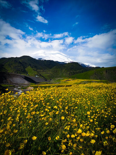 View of yellow flowering plants on field against cloudy sky