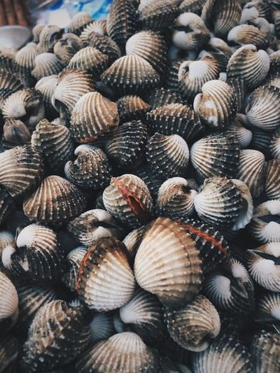 Close-up of shells for sale at market stall