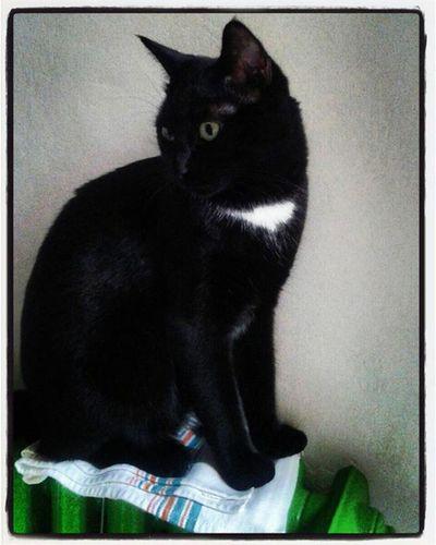 Rocco Douglas Boiler Catoftheday Cataholic Blackcats Instacats Puttanino Catsoninstagram Catsofinstagram Catsonradiators