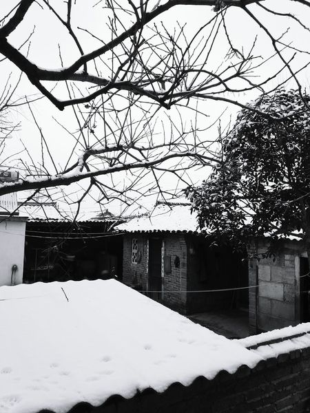 下雪后的小院 Tree Outdoors Nature Contryhouse