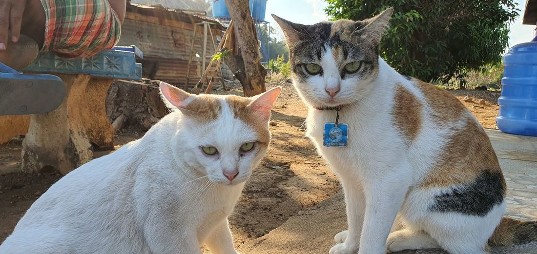 Portrait of two cats