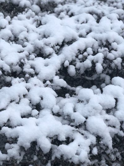 Cold Temperature Winter Snow No People White Color Nature Full Frame High Angle View Snowing Frozen Plant Backgrounds Covering Outdoors Day Land Beauty In Nature Tranquility Growth Close-up