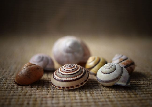 Leer Still Life Indoors  Table No People Close-up Day Herbststimmung Focus On Foreground Snail Snail Shell Canon