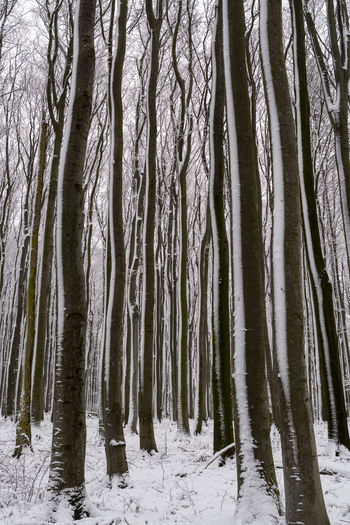 Natural Symmetry Forest Forest In Winter Geometry Natural Geometry Snow Snow On Trees Symmetry Tree Tree Trunk Trunk Winter