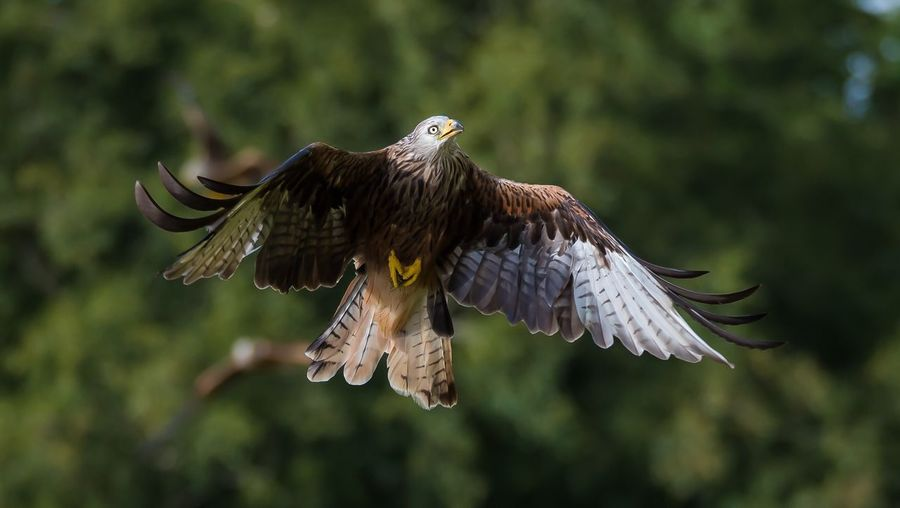Low angle view of eagle flying in mid-air