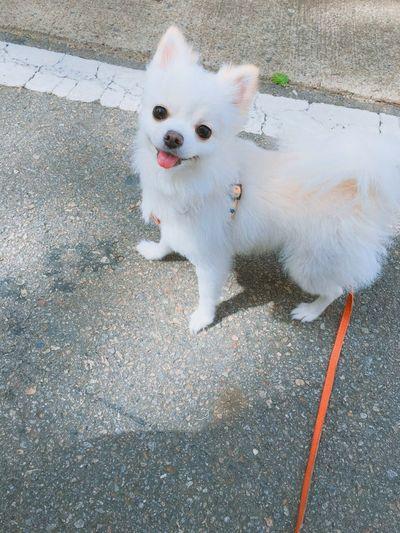 Cute Korean Dog
