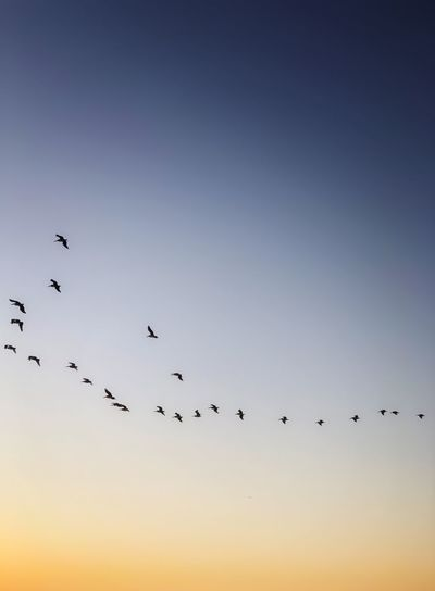 Flyb Sky Flying
