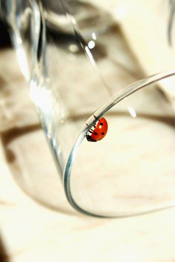 Clicking Photos Small Objects Lady Bug Red Ladybug Black Dots Glass Check This Out Nature's Diversities Found On The Roll