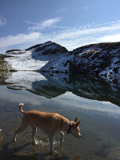 High angle view of dog walking on lake