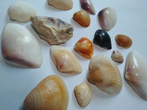 ⚓🐚🌊 No People Photographymobile TheWeekOnEyeEM EyeEmNewHere Simple Photography Simplicity Natureza Conchas Shells Shell Collection Colors Seashell Live For The Story