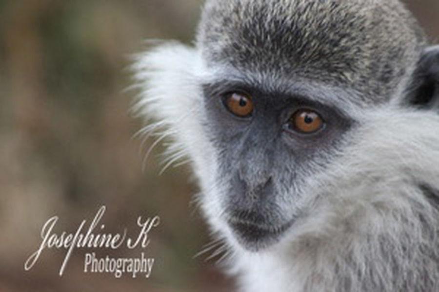 Pet Pet Photography  Pet Life  Pet Lover