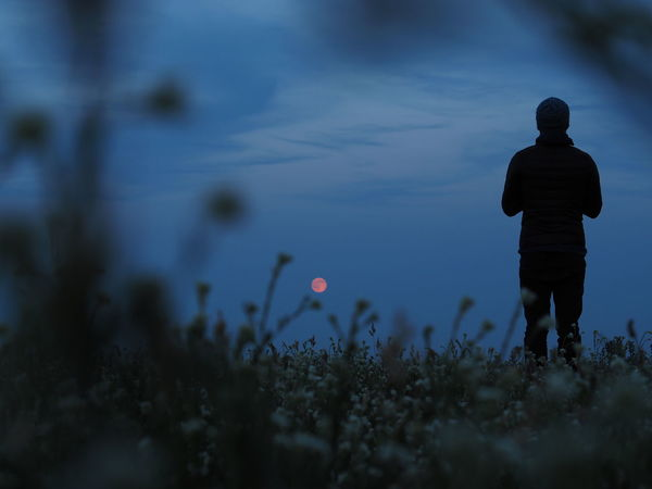 Alone Alone Time Flower Full Moon Night  Fullmoon Happiness Magic Magical Magical Moments Namaste Nature Outdoors Peace Peaceful Quiet Quiet Moments Serene Outdoors Serenity Sky Solitude Strawberry Moon Strawberry Moon 2016 Summer Summer Night Summer Nights