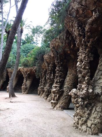 Tree Nature Rock - Object Outdoors Beauty In Nature Park Guell Gaudi Architecture Barcelona