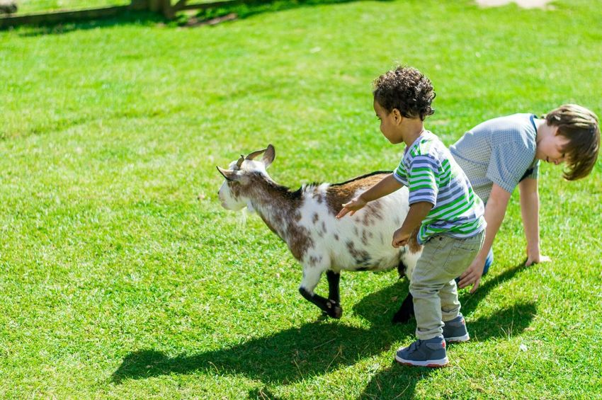 Animals Goat Moments Sunny Day Everyday Joy We Are Family Rule Of Thirds Spring Into Spring Capturing Freedom THESE Are My Friends