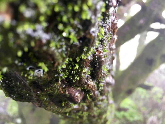 Tree & Trunk Rainy Days Sinhgad Fort Beauty In Micro World