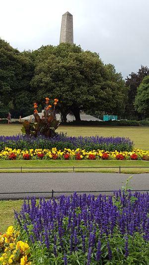 Phoenix Park Dublin Ireland Wellington Monument Obelisk Flower Flower Head Flowerbed Tree Multi Colored Purple Greenhouse Sky