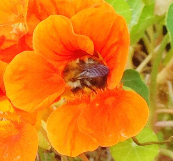 Bee Flower Petal Nature Flower Head Taking Photos