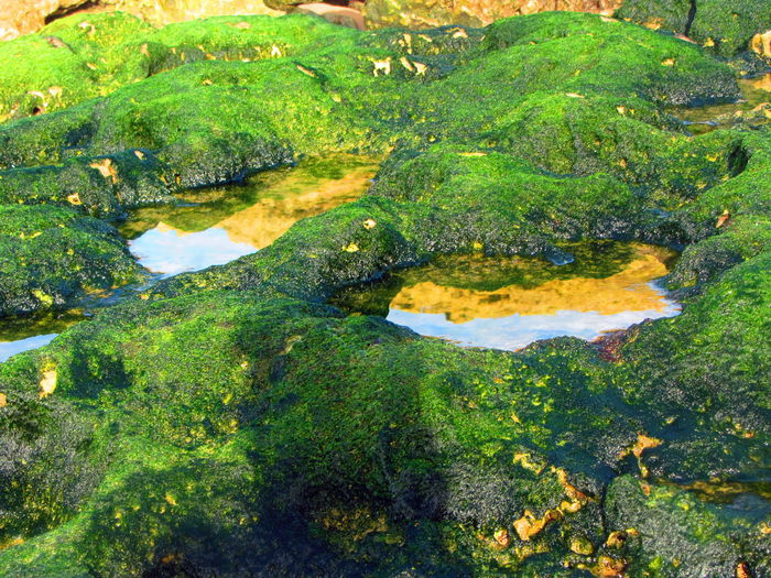 Carcavelos Carcavelos Portugal Portugal Reflection Rock Close-up Day Green Color Moss Nature No People Outdoors Poddle Seaside Water Yellow