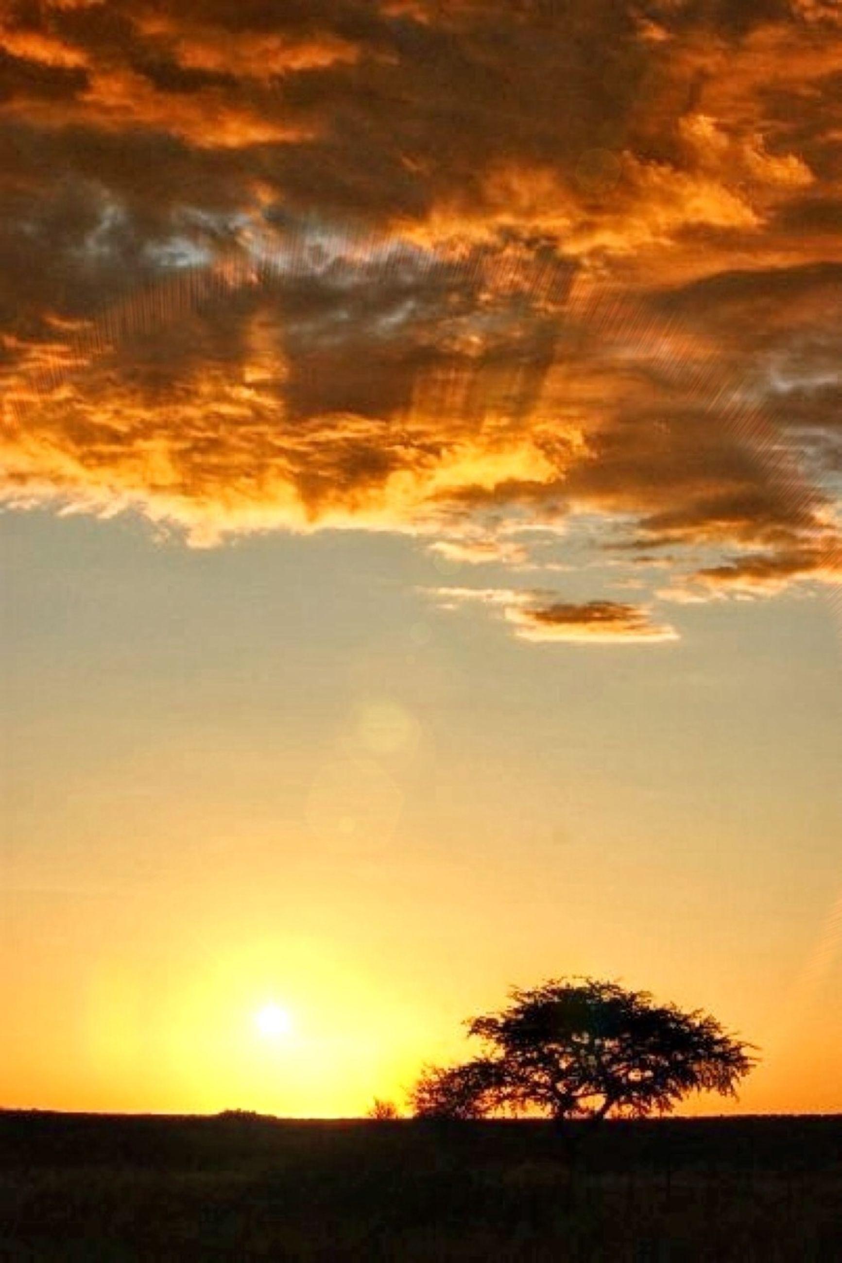 sunset, tranquil scene, scenics, orange color, tranquility, beauty in nature, sky, landscape, silhouette, idyllic, sun, nature, cloud - sky, field, tree, dramatic sky, horizon over land, cloud, non-urban scene, sunlight