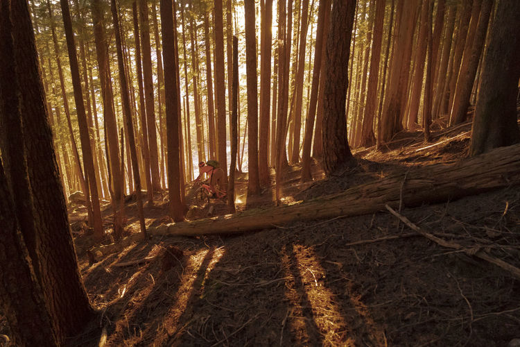 Man riding bicycle amidst trees in forest