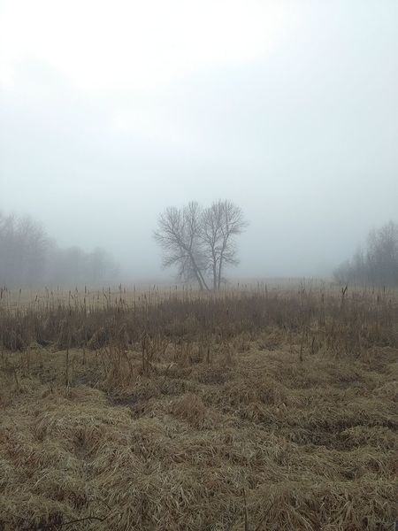 Tail End Of Winter! Fog Nature Tree No People Tranquility Outdoors Beauty In Nature Textured  Lochness Park Grey Skies Foggy Morning Zero Edits Scenics Wood Structure EyeEmNewHere