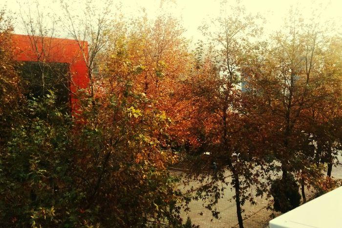 Sonbahar Fall Beauty Autumn Autumn🍁🍁🍁 Trees Sky Manisa  Cbü Manisa Iibf