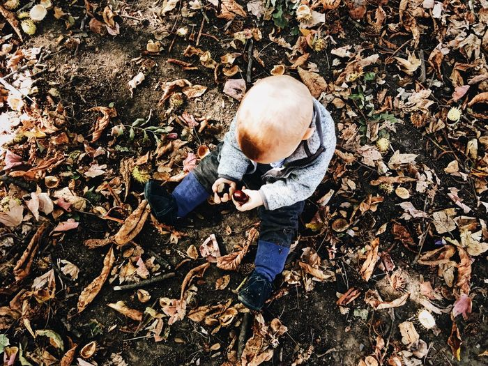 High angle view of baby boy sitting on field during autumn
