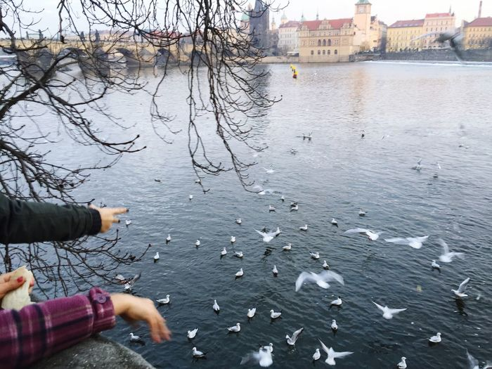 Christmas day in Prague. Christmas Time Christmas Day Christmas Around The World Christmas2015 Vltava Feeding The Birds Showcase: December Adapted To The City