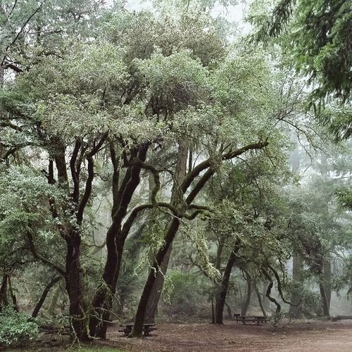 A nice place for a picnic. Marin Mounttamalpais Mounttam Cataractcreek laureldell california hiking