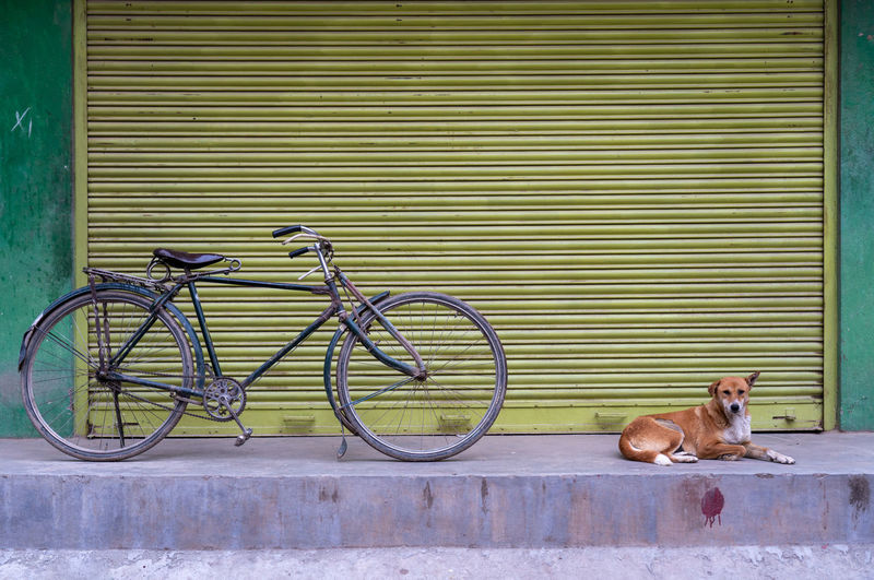 Stray dog relaxing by bicycle on sidewalk