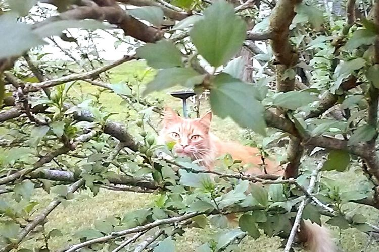 Catinabush Cats