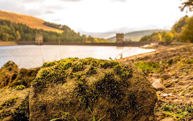 Close-up of moss growing on rock by river against sky