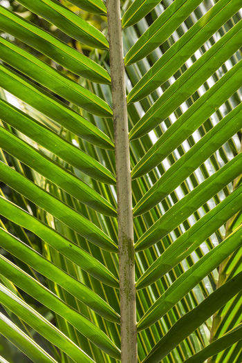 Palm leaf, Fond Doux Holiday Plantation, Saint Lucia Animal Themes Backgrounds Beauty In Nature Close-up Day Full Frame Green Color Growth Leaf Nature No People Outdoors