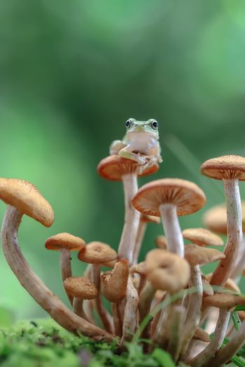 Close-up of frog sitting on mushroom