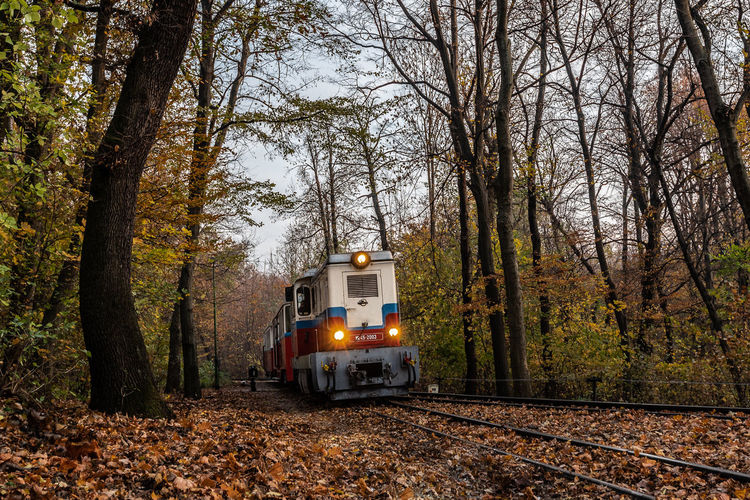 Nature Train Trees Tree Autumn Red Day Outdoors Forest Track Transportation Railway Public Transportation Plant Rail Road Railroad Track No People Rail Transportation Land Vehicle Mode Of Transportation Land WoodLand Non-urban Scene