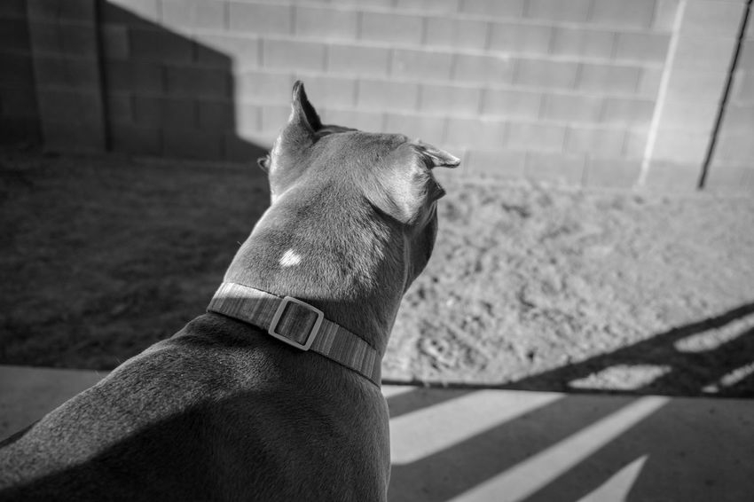 Animal Themes Blackandwhite Close-up Day Dog Domestic Animals Mammal No People One Animal Outdoors Pets